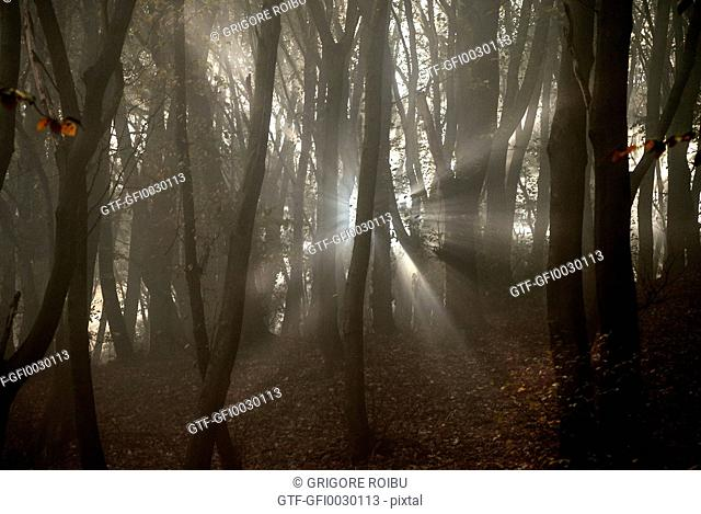 Lights by forest