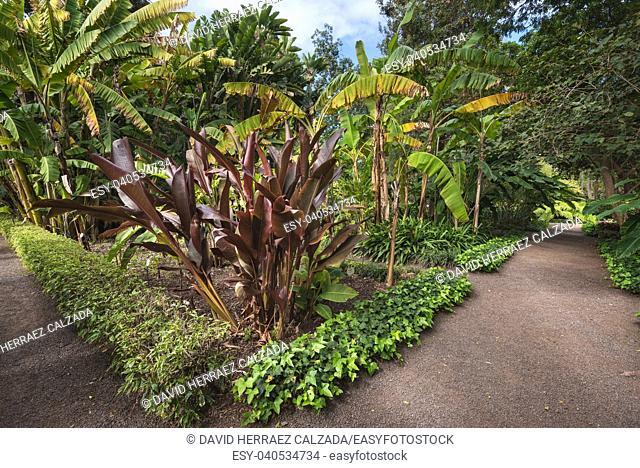 Botanic garden in Puerto de la Cruz, Tenerife, Canary islands, Spain