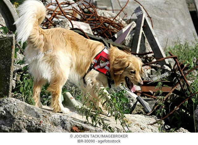 DEU, Federal Republic of Germany, Duisburg: Rescue dogs of the fire service. The searchdogs can find person under a collapst house