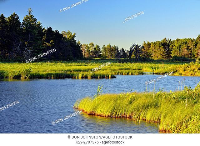 Seney wetlands in early summer, Seney NWR, Michigan, USA
