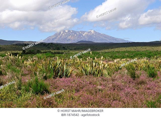 Mount Ruapehu seen from State Highway 47, North Island, New Zealand