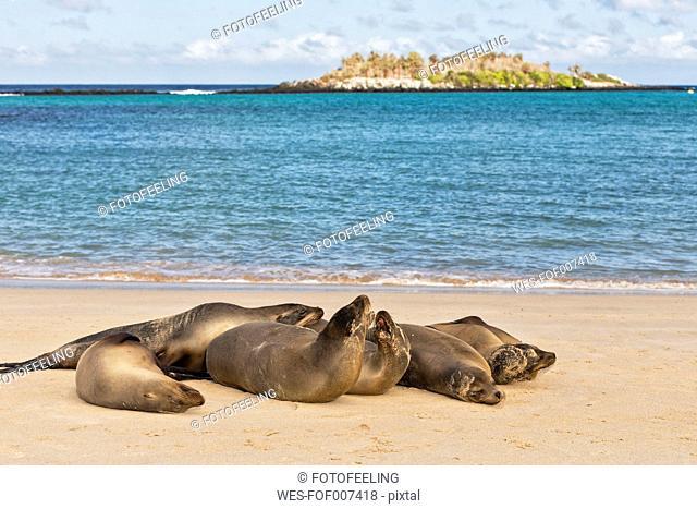 Ecuador, Galapagos Islands, Santa Fe, six sea lions lying on beach at seafront