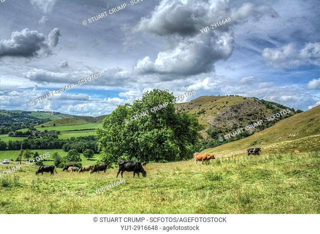 HDR image of storm clouds over cows in a field at Dovedale in Derbyshire UK