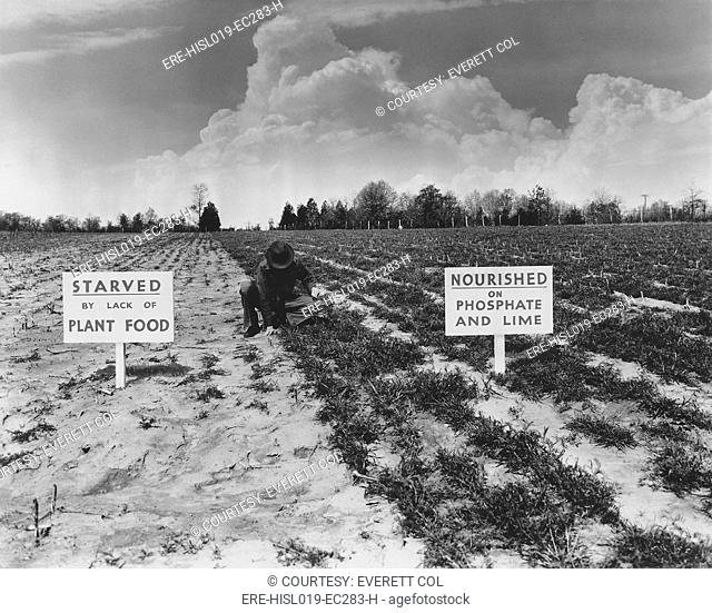 1930 New Deal programs promoted chemical fertilizers for their efficiency and effectiveness. This Tennessee Valley Authority photo compares a barren field with...