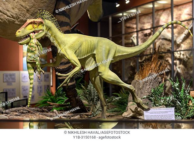 Eotyrannus lengi eating Hypsilophodon model, Dinosaur Isle Museum, Sandown, Isle of Wight, UK