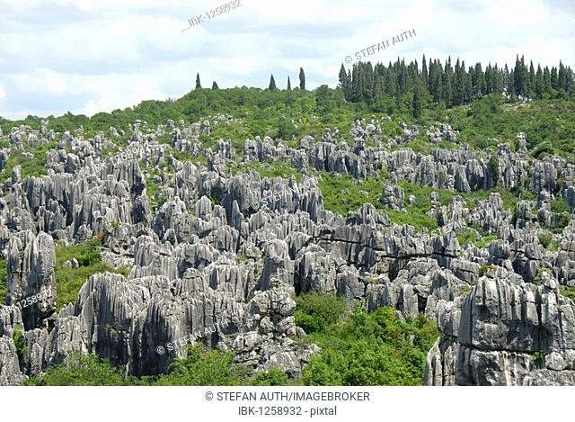 UNESCO World Heritage Site, rocks like sculptures, Karst topography, Shilin Stone Forest, Yunnan Province, People's Republic of China, Asia