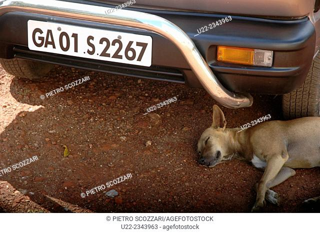 Old Goa, Goa, India: a stray dog sleeping under a car wheel