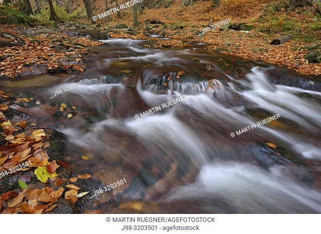 The river Ilse in the Ilse Valley with autumn leaves, autumn. Heinrich Heine Trail. Ilse River, Ilse Valley, Ilsenburg, Harz National Park, Harz, Saxony-Anhalt