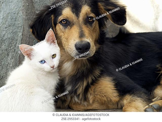 Close up of a white kitten and a young dog side by side