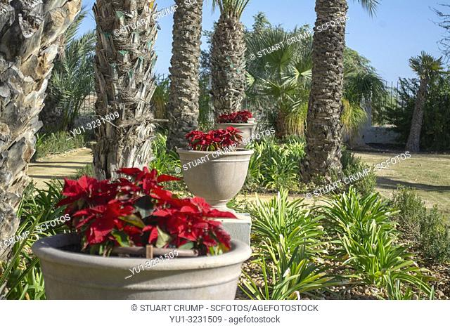 Poinsettias outside of El Cason at Hacienda Riquelme Golf Resort