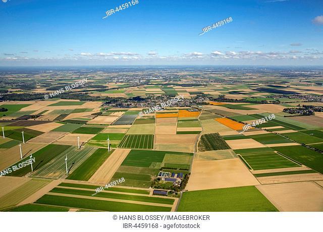 Agricultural land, pumpkin fields, Löwenich near Erkelenz, Niederrhein, Rhineland, North Rhine-Westphalia, Germany