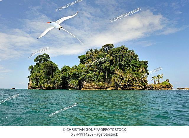 seabirds Tropicbirds, Pajaros Islet also named Swan's Cay off the coast of Boca del Drago on Colon Island, Bocas del Toro Archipelago, Republic of Panama