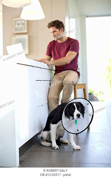 Man using laptop by dog wearing cone