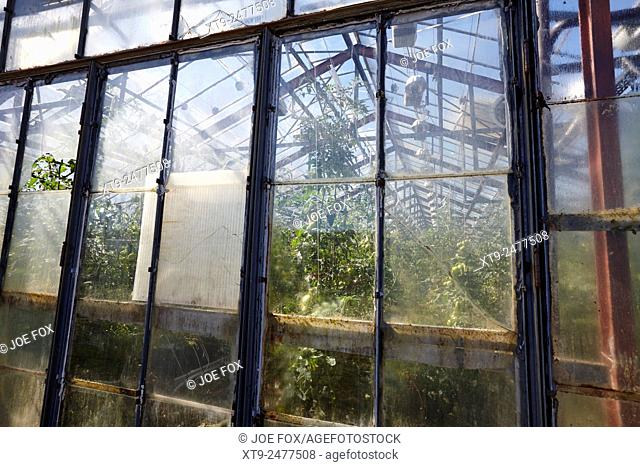 illuminated greenhouses heated by geothermal energy for growing tomatoes Hveragerdi iceland