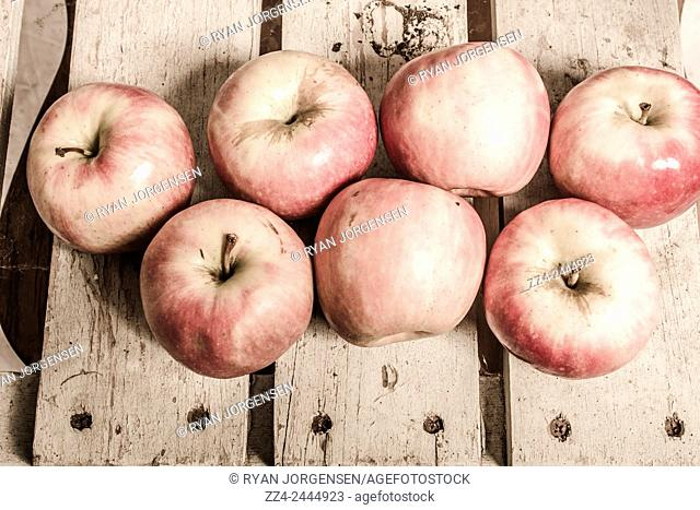 Crate of imperfect apples on retro wood planks. Weathered fruits