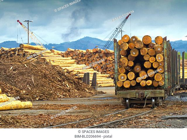 Logs on railroad trailer