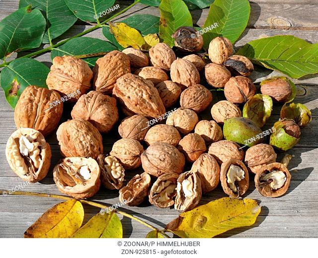 Juglans regia, Walnüsse, walnuts