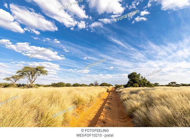 Africa, Botswana, Kgalagadi Transfrontier Park, Mabuasehube Game Reserve, empty sand track