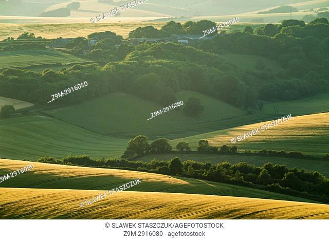 Summer evening in South Downs National Park near Brighton, East Sussex, England