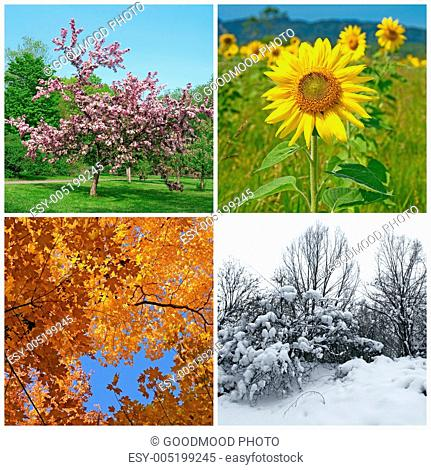 Spring, summer, autumn, winter. Four seasons
