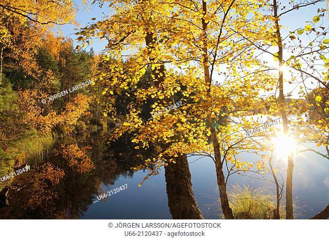 Lockvattnet, Björnlunda, Sweden
