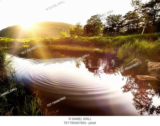 Ripples on pond in Acadia National Park