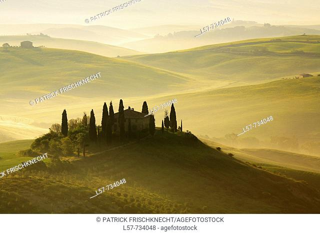 Cypress, Italian Cypress, Cupressus sempervirens, Zypresse, vineyards, country house, farm house, hill countryside, misty atmosphere, spring