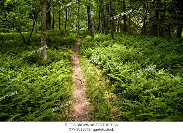A path in Clarence Fahnestock State Park, New York, USA