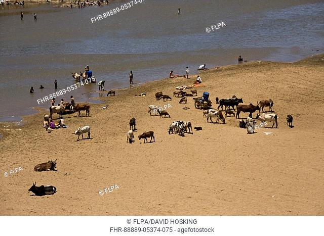The River Mandrare at Amboasary, Madagascar Local people washing cloths and collecting water with their Zebus cattle