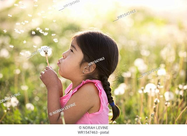 A young child in a field of flowers, blowing the fluffy seeds off a dandelion seedhead clock