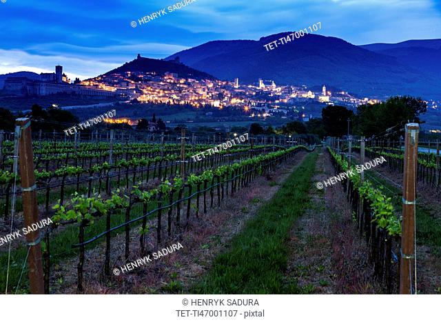 Vineyard with town in background at dusk