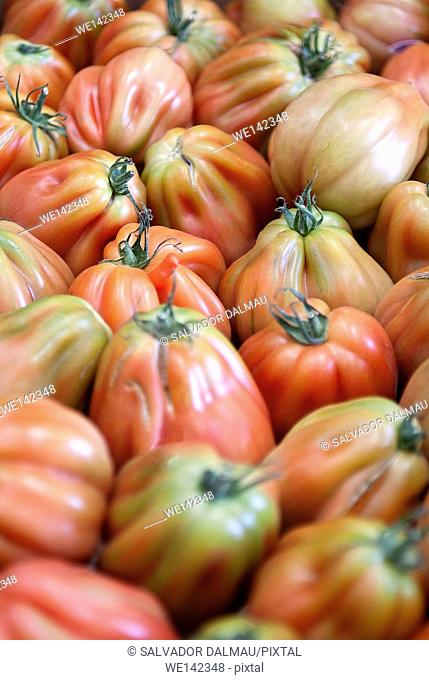 photography studio, creative,selection of plum tomatoes,location girona,catalonia,spain,europe,