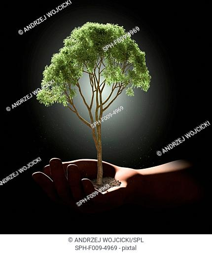 Person holding a tree in their hand, computer artwork