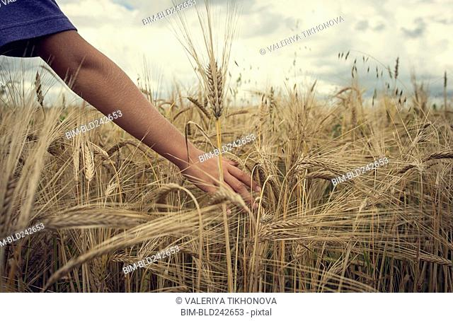 Arm of Caucasian boy in field of wheat