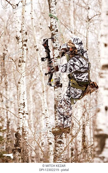 Bowhunter Hunting Deer In Tree Stand
