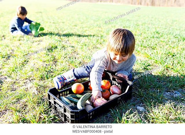 Boy sitting on meadow with basket full of vegetables