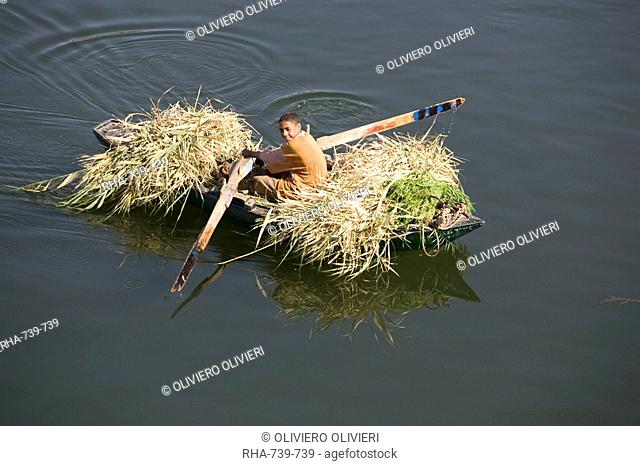 Transporting reeds along the Nile, near Aswan, Egypt, North Africa, Africa