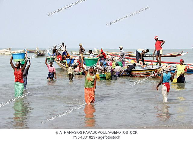 African women carry big buckets full of fishes on their heads from the fishing boats to the coast and the fish market, Tanji Village, Tanji, Gambia, Africa