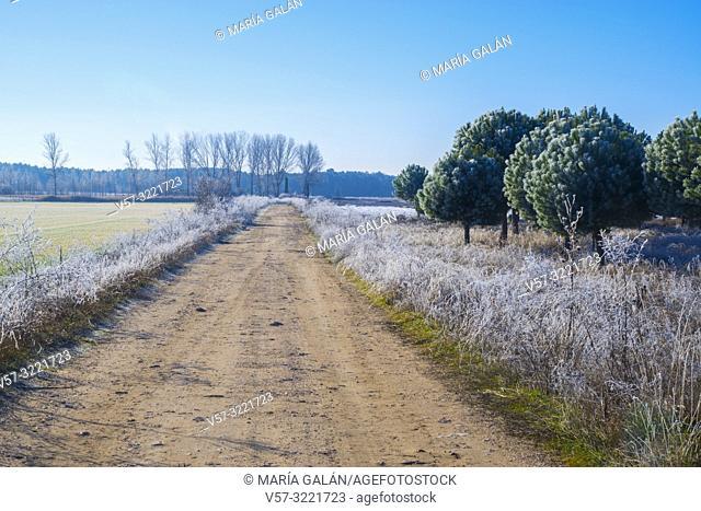 Winter landscape. Segovia, Castilla Leon, Spain