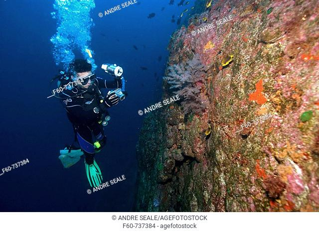 Diver photographs black coral, Anthipataria sp , St  Peter and St  Paul's rocks, Brazil, Atlantic Ocean