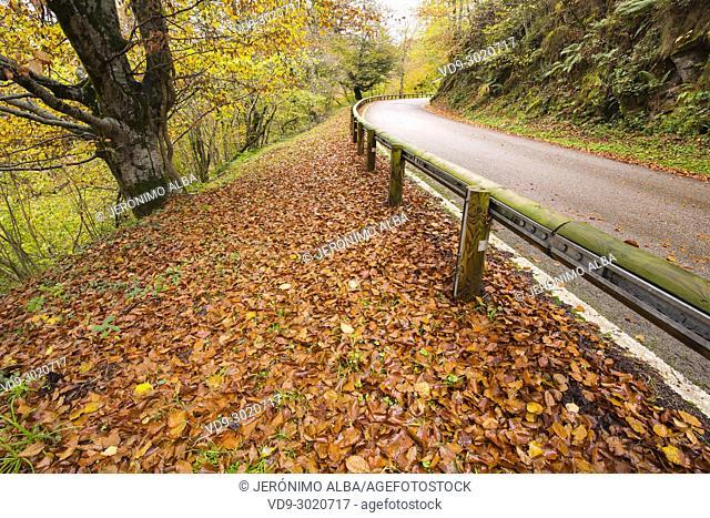 Autumn leaves and mountain road landscape, Saja Natural Park, Saja-Nansa, Cantabria, Spain Europe