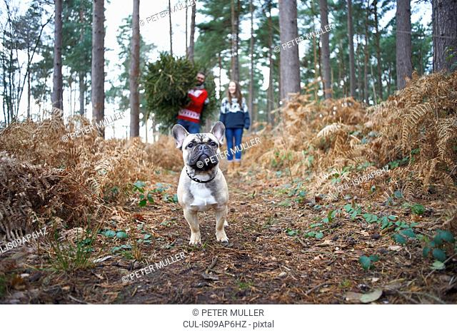 Portrait of dog in front of young couple with Christmas tree in forest