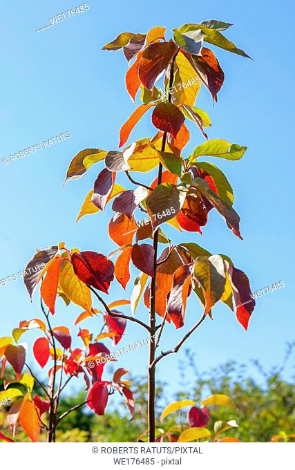 Autumn new tree with the blue sky background