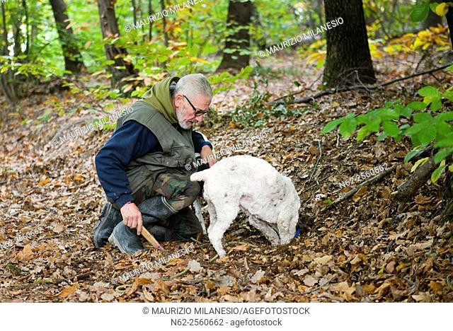 Senior man looking truffles in the woods with his dog