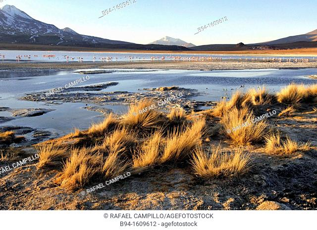 Laguna Hedionda is a saline lake in the Nor Lípez Province, Potosí Department in Bolivia. It is notable for various migratory species of pink and white...