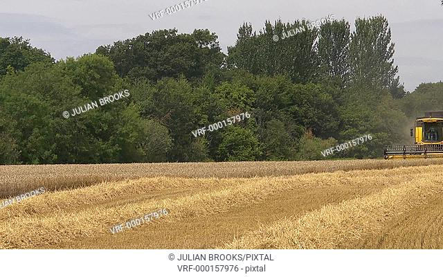 Time Lapse wheat Harvest - Yellow Combine Harvester - Towards camera