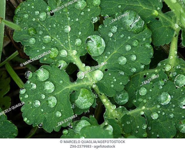 Droplets. Montseny Natural Park. Barcelona province, Catalonia, Spain
