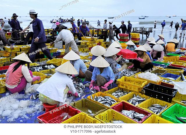 Vietnam, Long Hai, fish market on the beach of Long Hai