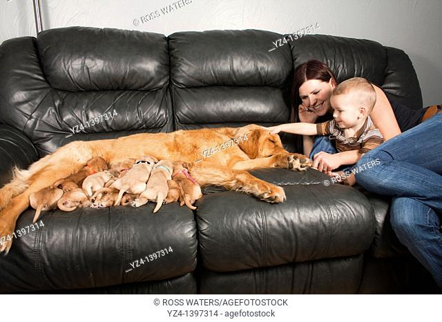 A mother and toddler sitting with their Golden Retriever female dog and her eleven one-week-old puppies
