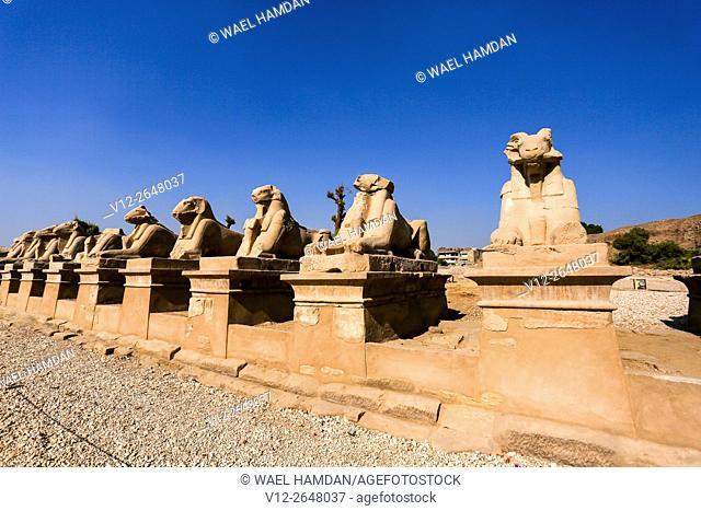 Sphinx at Temple of Karnak, , Luxor, Egypt